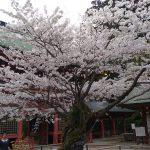 松島お花見旅 塩釜神社~松島一の坊